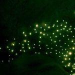 Ateş Böcekleri ile bir Gece