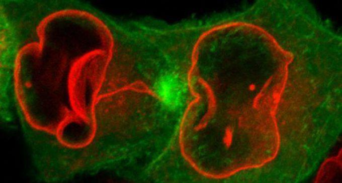 Çok Hücrelilere Geçiş Evrimine Kısa Bir Bakış