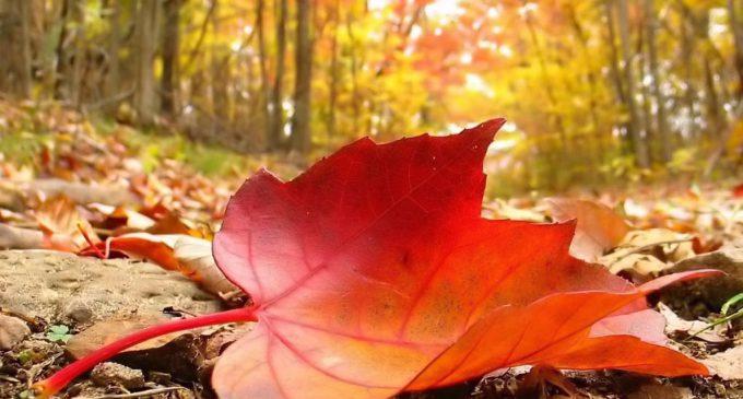 Bir Yaprak Düştü…