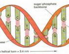 Tüm canlı varlıklar genlerinin kölesidir