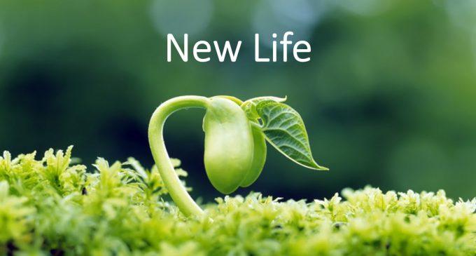 Merhaba yeni hayat!