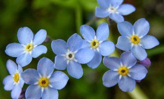 Unutma Beni Çiçekleri