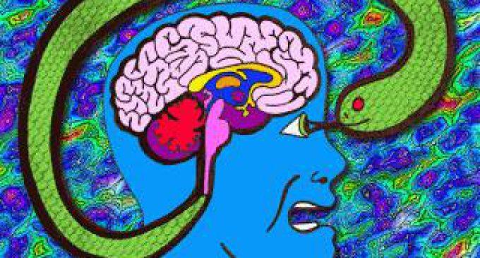 Amigdala – Korteks Savaşı