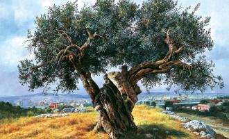 Ağaçların kralı; Zeytin