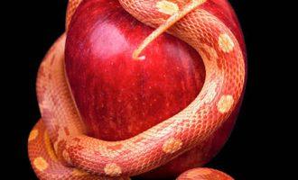 Elmayı yemek lazım….
