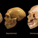 Evrimde gizemli halka: Denisova insanları